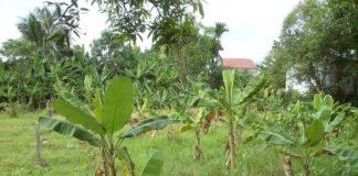 chuyển đổi đất vườn lên thổ cư
